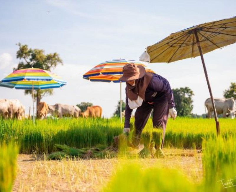 ประชากรในเขตองค์การบริหารส่วนตำบลห้วยยั้ง ร้อยละ 52.31 ประกอบอาชีพเกษตรกรรม